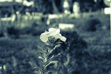 Free Flora, Plant, Leaf, Black And White Royalty Free Stock Photos - 133774958