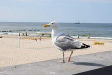 Free Bird, Seabird, Gull, Shore Royalty Free Stock Photos - 133774988