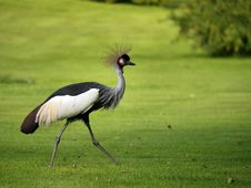 Free Bird, Ecosystem, Crane Like Bird, Crane Royalty Free Stock Images - 133775129