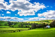 Free Green Leafed Trees Under Blue Sky Stock Images - 133792184