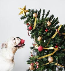 Free Animal, Bulldog, Candy Royalty Free Stock Images - 133792249