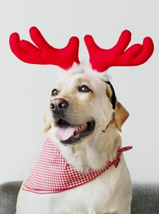 Free Animal, Bandana, Canine Royalty Free Stock Photo - 133893335