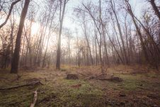Free Photo Of Bare Trees During Daytime Royalty Free Stock Photography - 133968777