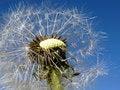 Free Impulse Of A Wind Stock Image - 1340511