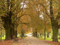 Free Park Lane In Autumn Royalty Free Stock Photography - 1342067