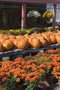Free Autumn Display Royalty Free Stock Photos - 1347228