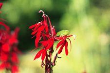 Free Grasshopper Stock Image - 1340031