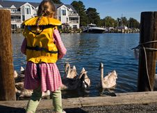 Young Girl Feeding Swans Royalty Free Stock Photography