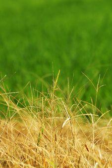 Free Padi Field Stock Image - 1340751