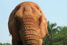 Free Elephant Royalty Free Stock Images - 1340919