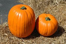 Free Pumpkin Patch Royalty Free Stock Images - 1342199