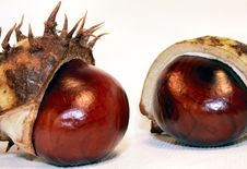 Free Chestnut Pair Royalty Free Stock Image - 1342236