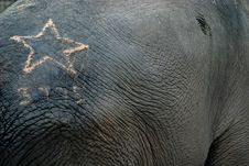 Free The Asian Elephant With Tattoo Stock Photos - 1344253