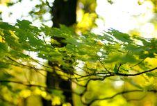 Free Golden Foliage Stock Photos - 1344633