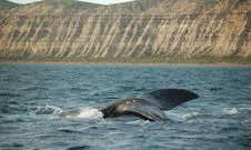 Free Whale Swimming Stock Photo - 1345350