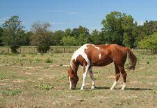 Free Horse Royalty Free Stock Photos - 1346028