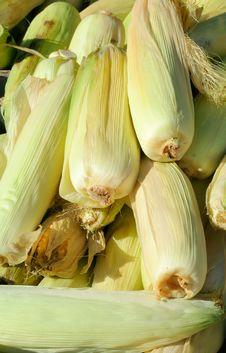 Corn Cobs Stock Image