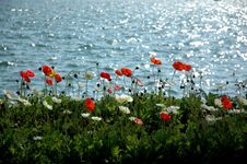 Free Poppyfield At Lugano Stock Images - 1347194