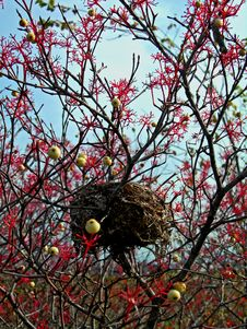 Free Nest And Berries Stock Photos - 1348333