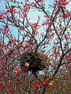 Free Nest And Berries Stock Photos - 1348383