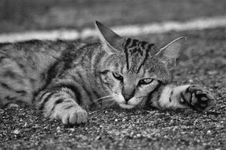 Free Cat, Black And White, Whiskers, Fauna Stock Photo - 134004390