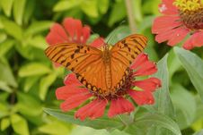 Free Butterfly, Flower, Moths And Butterflies, Brush Footed Butterfly Stock Photography - 134004612