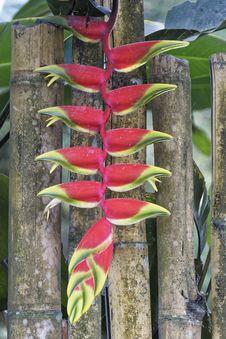 Free Plant, Heliconia, Flora, Leaf Stock Photos - 134004693