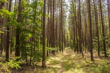 Free Ecosystem, Forest, Spruce Fir Forest, Woodland Royalty Free Stock Photography - 134005027