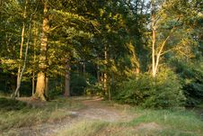 Free Ecosystem, Nature, Woodland, Temperate Broadleaf And Mixed Forest Royalty Free Stock Photography - 134005047
