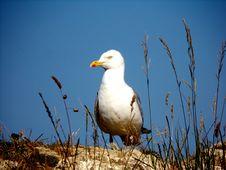 Free Bird, Seabird, Beak, Gull Stock Photos - 134005063