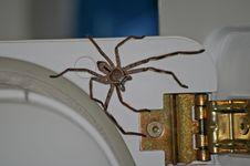Free Invertebrate, Arthropod, Arachnid, Spider Stock Photography - 134005122