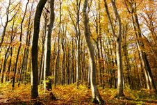 Free Woodland, Nature, Ecosystem, Temperate Broadleaf And Mixed Forest Royalty Free Stock Photo - 134005125