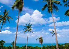 Free Sky, Vegetation, Tropics, Borassus Flabellifer Royalty Free Stock Photography - 134005417