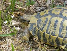 Free Emydidae, Reptile, Turtle, Tortoise Royalty Free Stock Image - 134005576