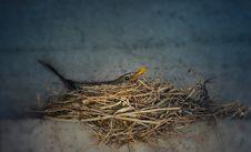Free Fauna, Bird, Bird Nest, Nest Royalty Free Stock Photography - 134005717
