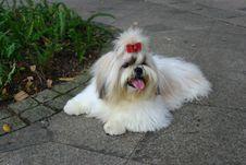 Free Dog Like Mammal, Dog, Dog Breed, Dog Breed Group Stock Images - 134005884