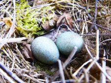 Free Bird Nest, Nest, Egg, Grass Royalty Free Stock Photo - 134005905