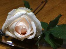 Free Flower, White, Rose, Rose Family Royalty Free Stock Photo - 134005955