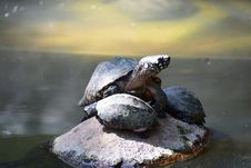 Free Gray Turtle Stock Images - 134072264