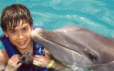 Free Dolphin, Marine Mammal, Common Bottlenose Dolphin, Mammal Royalty Free Stock Photo - 134103645