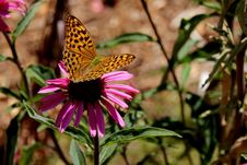 Free Butterfly, Flower, Moths And Butterflies, Monarch Butterfly Stock Photos - 134103873