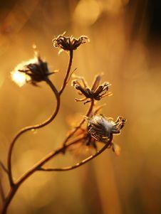 Free Flora, Honey Bee, Flower, Macro Photography Royalty Free Stock Photo - 134104015