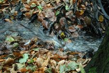 Free Water, Leaf, Stream, Autumn Royalty Free Stock Images - 134104359