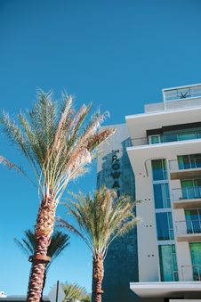 Free Palm Trees Near High-rise Building Stock Photo - 134169520