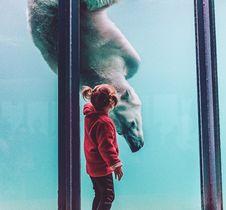 Free Girl Standing While Watching Polar Bear In Aquarium Royalty Free Stock Photo - 134169835