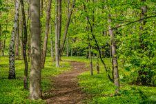 Free Woodland, Ecosystem, Forest, Nature Royalty Free Stock Image - 134212696