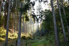 Free Ecosystem, Nature, Forest, Woodland Royalty Free Stock Image - 134213016