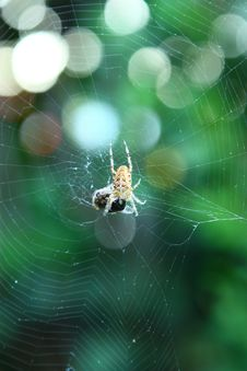 Free Spider Web, Green, Invertebrate, Spider Royalty Free Stock Photography - 134213647