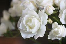Free Flower, White, Rose Family, Rose Stock Image - 134213691