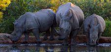 Free Wildlife, Rhinoceros, Mammal, Terrestrial Animal Stock Images - 134213704